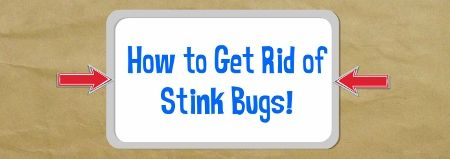 How to get rid of stink bugs quickly and naturally