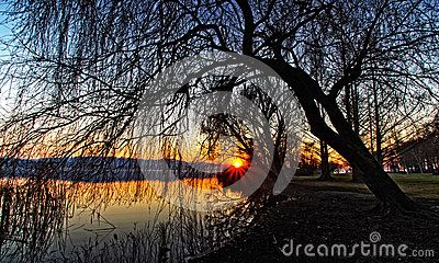 Sunset through the trees branches on lake in winter.