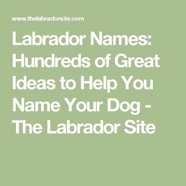 Labrador Names: Hundreds of Great Ideas to Help You Name Your Dog - The Labrador Site