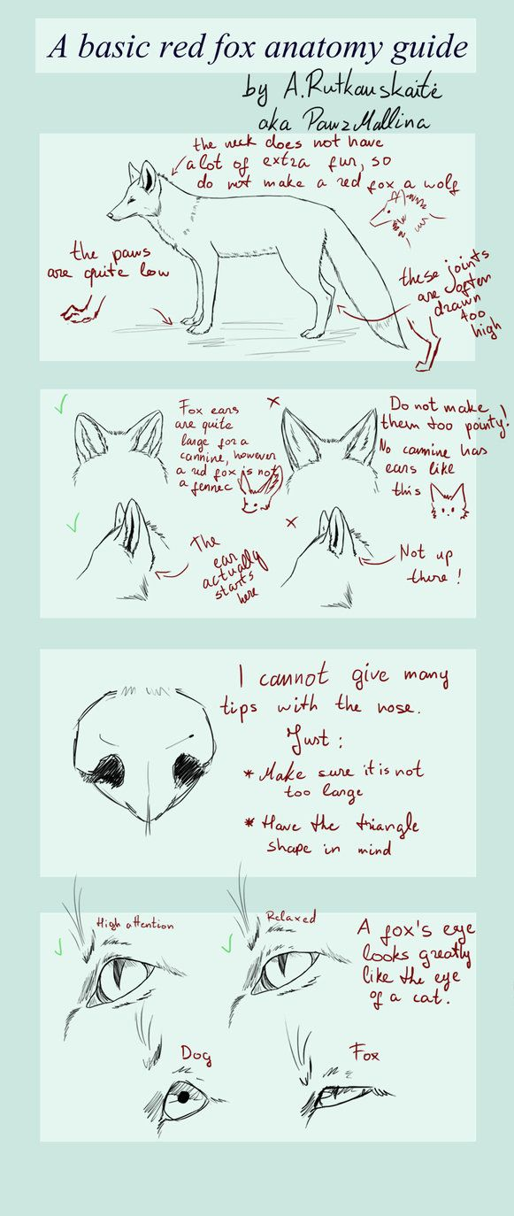 fox anatomy tutorial  An awesome and helpful little anatomy tutorial :D  fox anatomy tutorial, fox, anatomy, cool, awesome, cute