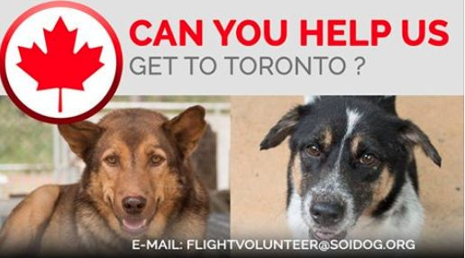 ***FLIGHT VOLUNTEERS WANTED***  Are you departing from THAILAND and flying to Toronto, CANADA?  If you are traveling FROM Thailand TO Toronto, on BOOKED tickets with Thai Airways, All Nippon Airways (ANA), China Airlines, Qatar, Korean Air, JAL, EVA, Lufthansa or KLM, please EMAIL jan@soidog-foundation.org for more information. http://www.soidog.org/en/be-a-flight-volunteer