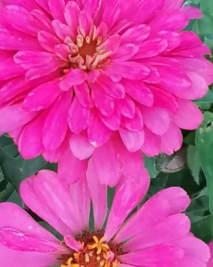 Alcuni dei fiori del mio giardino, incredibilmente profumati e colorati. Da quan…