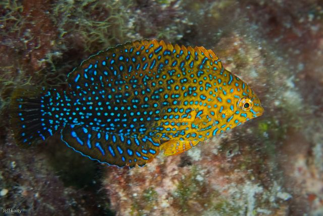 Fish while diving kona hawaii sea animals pinterest for Fish of hawaii