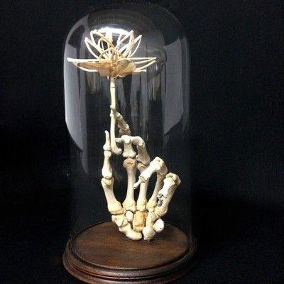 Mattaeus ball human hand with bone flower - Memento Mori: A cabinet of curiositiesMemento Mori: A cabinet of curiosities