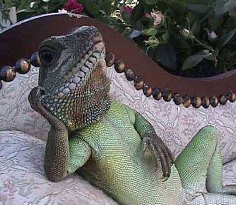 Does your lizard think it's human sometimes?
