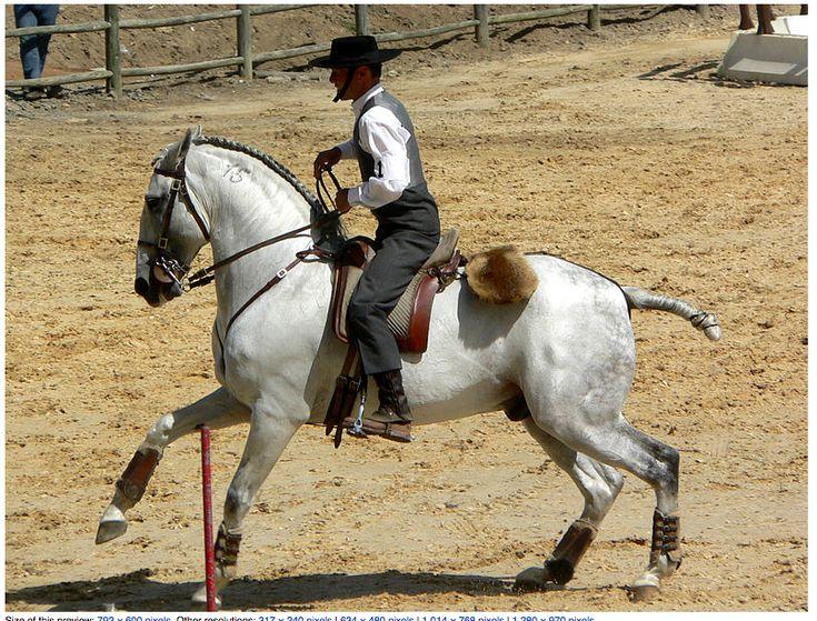 Equitação de trabalho com cavalo lusitano em Portugal!