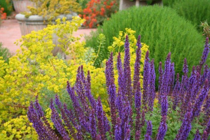 jardin méditerranéen avec jacinthes et euphorbes