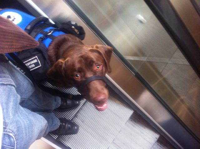 Buying A Trained Therapy Dog