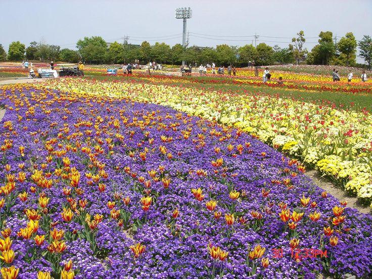 Nabana To SatoTulip festival, kuwana, Japão