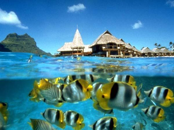 Snorkeling is amazing! Coral Reef, Buckets Lists, Dreams Vacations, Best Quality, Beach, Places, Underwater World, Borabora, Travel Destinations