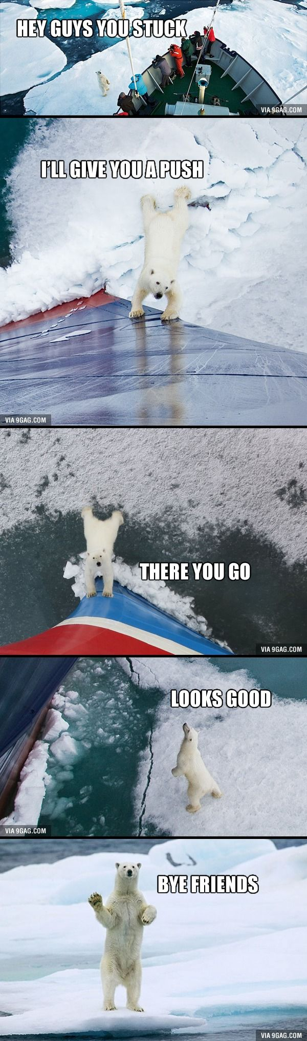 Friendliest polar bear ever! Probably just wanted them out of his habitat.