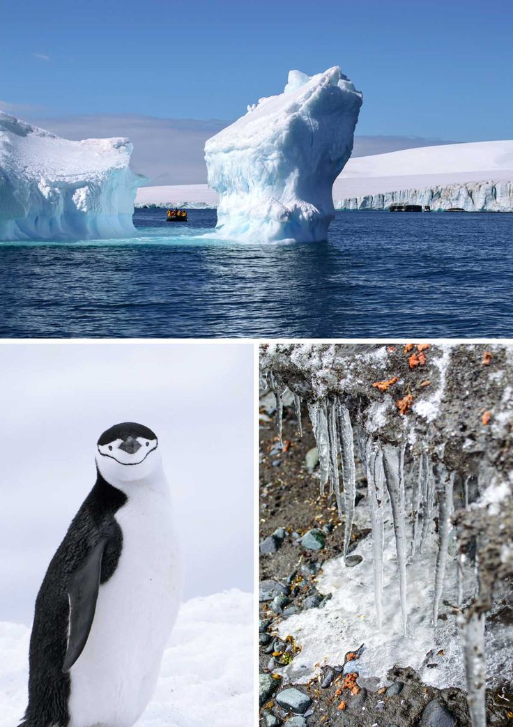 Icebergs, penguins and icicles in Antarctica | heneedsfood.com