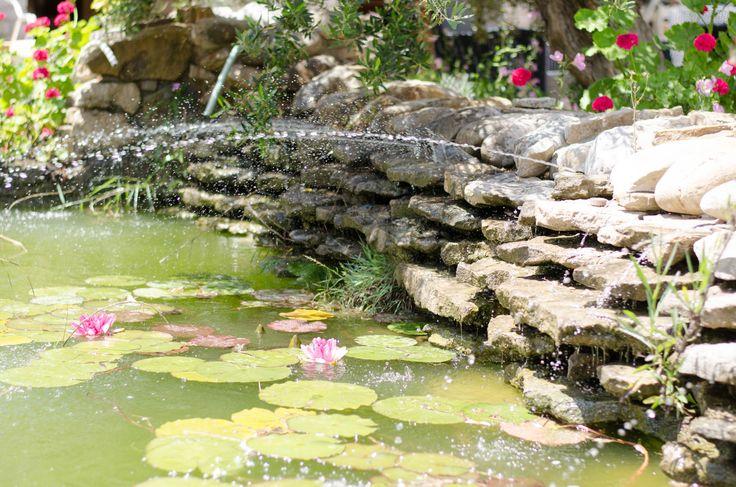 our ponds !