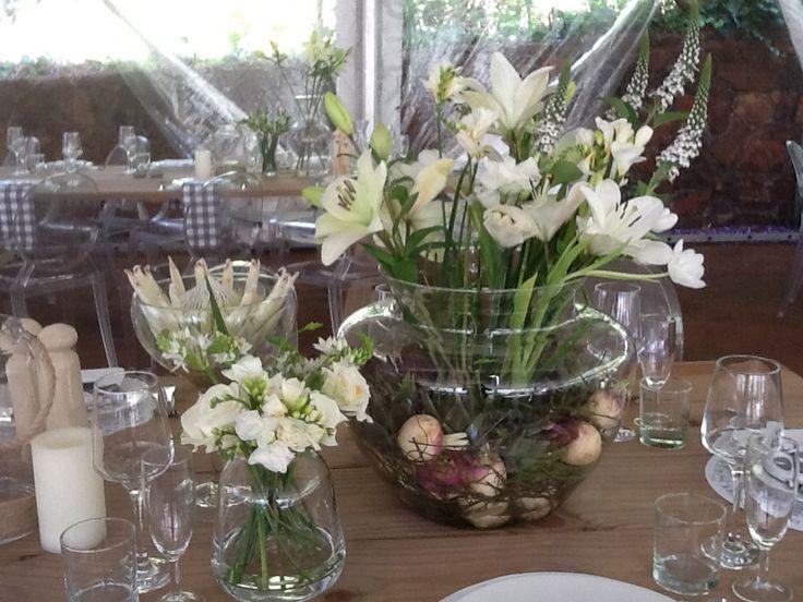Bulbs , Proteas and Tulips , beautiful