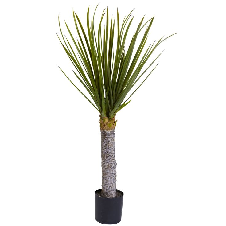 Yucca Tree in Pot