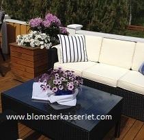 Isolert blomsterkasse/ blomsterkasser i tre fra Blomsterkasseriet. Terrasse veranda. Rhododendron i isolert blomsterkasse.