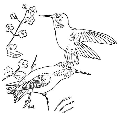 free printable hummingbird coloring pages for kids - Hummingbird Flower Coloring Pages