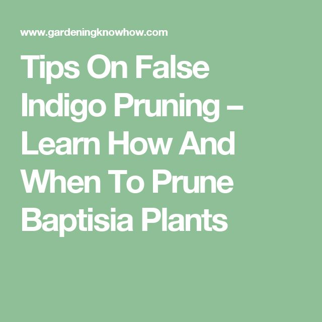 Tips On False Indigo Pruning – Learn How And When To Prune Baptisia Plants