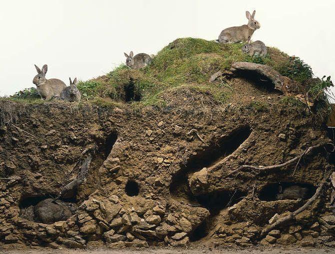 Rabbit Warren cross-section | Critters Make Art ...