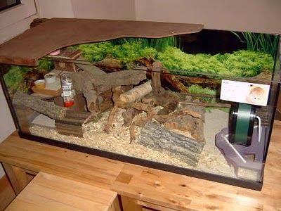 natural themed cage