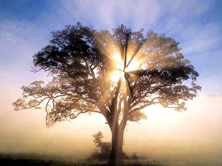 tree sunrise