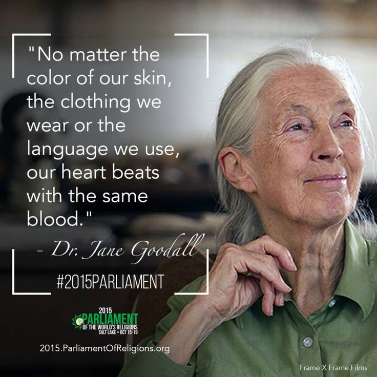 Jane Goodall Quotes Glamorous 37 Best Jane Goodall Images On Pinterest  Jane Goodall Primate And