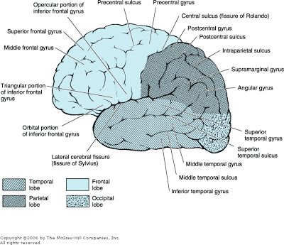 five major structures of the brain essay In this essay i reflect on a few important things i've come to appreciate about  brain function and evolution, where i think we should direct our future ener.