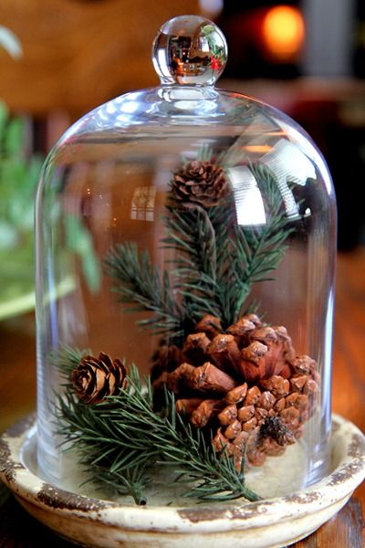 Cloche / bell jar with pinecones and greenery