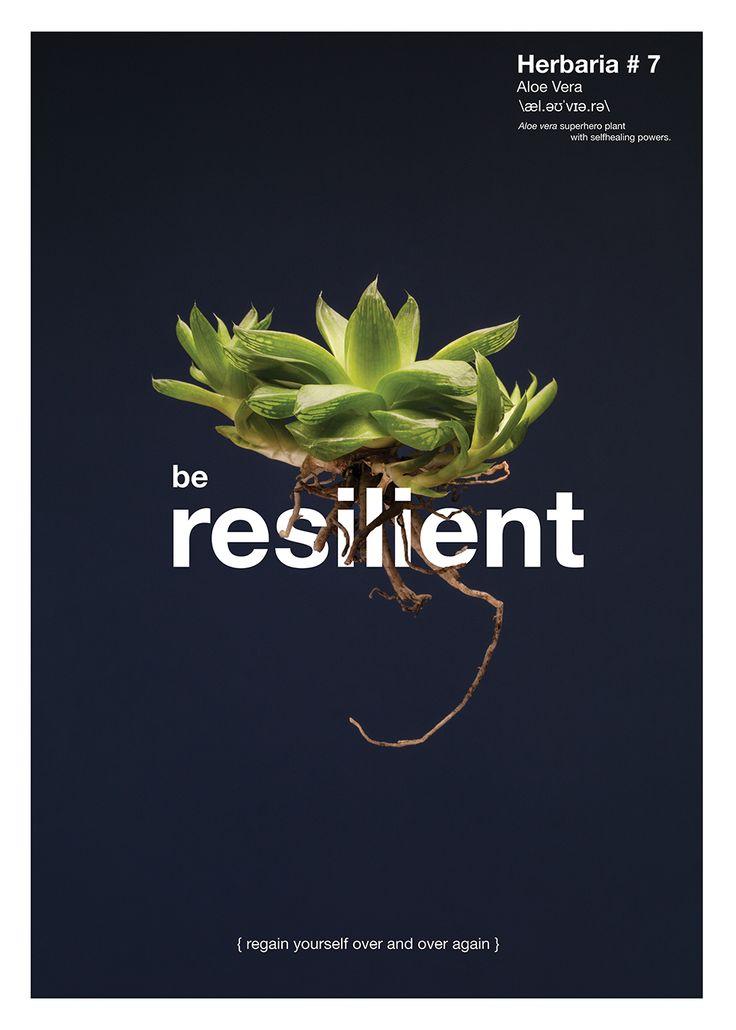 ECCIÓN No.7 / SE RESILENTE {LEVÁNTATE UNA Y OTRA VEZ}  Planta: Aloe Vera. Esta planta Súper héroe tiene el poder de curarse a sí misma.