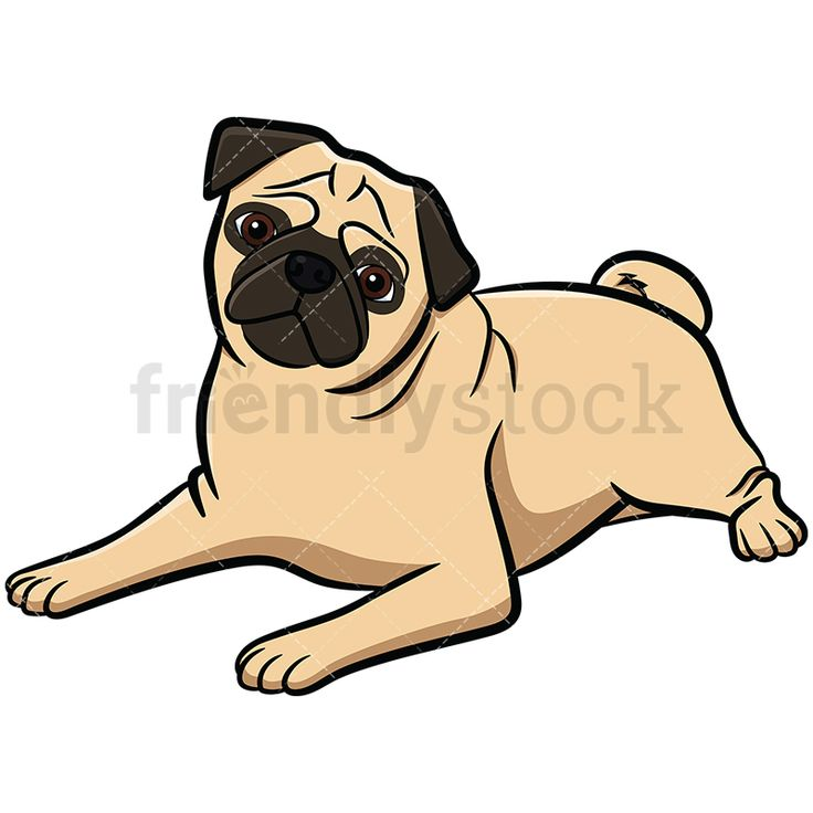 Pug Lying Down And Tilting Its Head: Royalty-free stock vector illustration of an apricot pug dog with a curly tail, lying down on the floor and tilting its head with curiosity. #friendlystock #clipart #cartoon #vector #stockimage #art #pug #cute #mastiff #chinese #dutch #aww #tilt