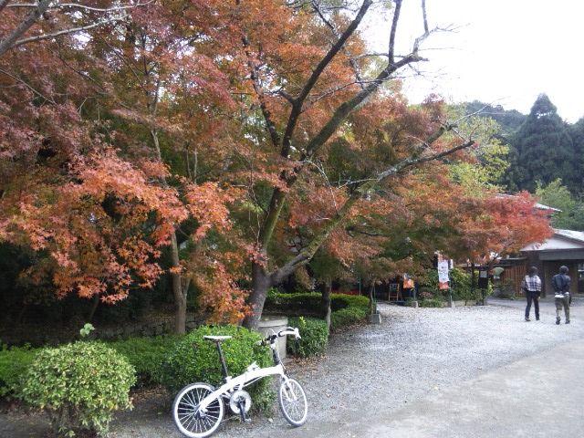 Copyright © ソニック 様 / DAHON Mu P8 2010(オーロラホワイト) / 福岡県朝倉郡 秋月城下町にて。いい具合に色付いていました。オレンジ色のもみじは久しぶりに観た気がします。