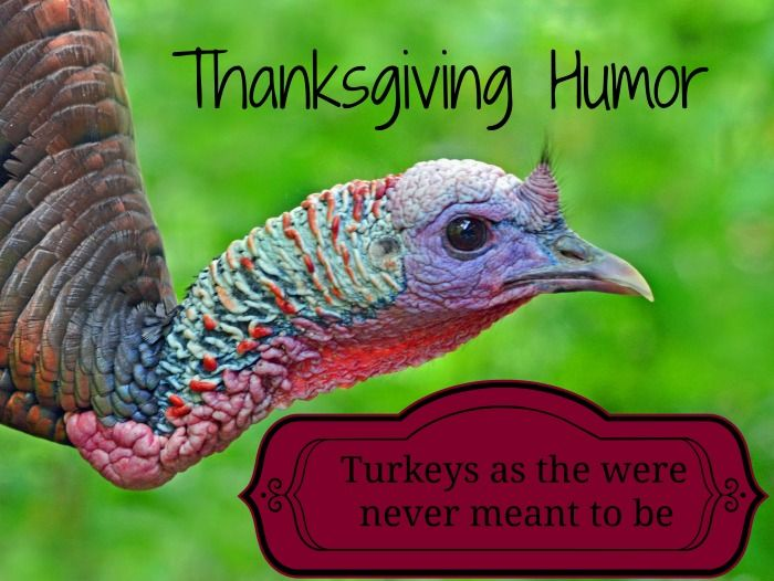 Thanksgiving Humor  Turkeys as they were never meant to be.  See all the humor at: http://stillblondeafteralltheseyears.com/2011/11/thanksgiving-humor-turkey-as-it-was-never-meant-to-be/