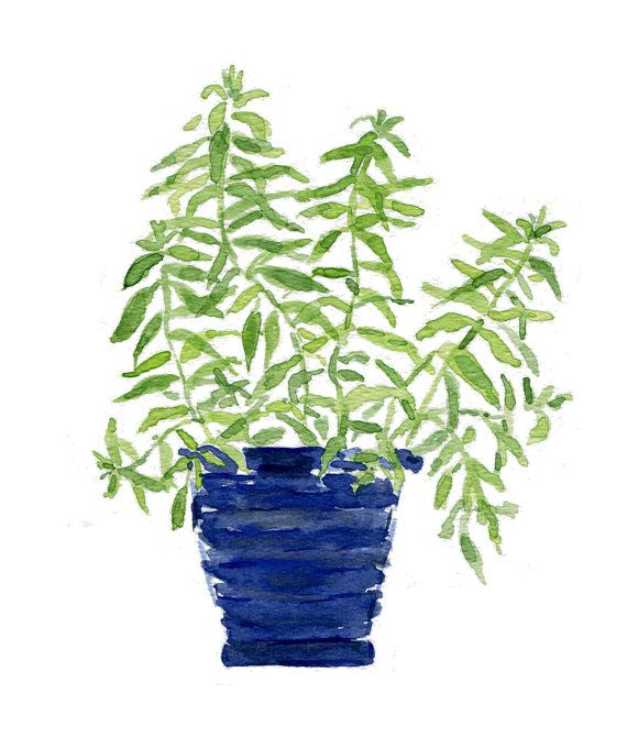 Lemon verbena plant in a Blue planter, original watercolor painting, herb…