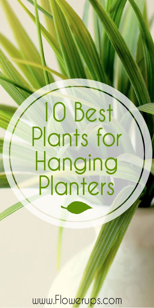 10 best plants for hanging planters. Great indoor plants for wall planters