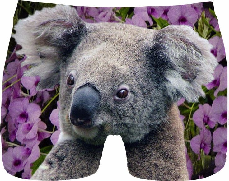 Check out my new product https://www.rageon.com/products/koala-and-orchids-men-underwear-2?aff=BWeX on RageOn!