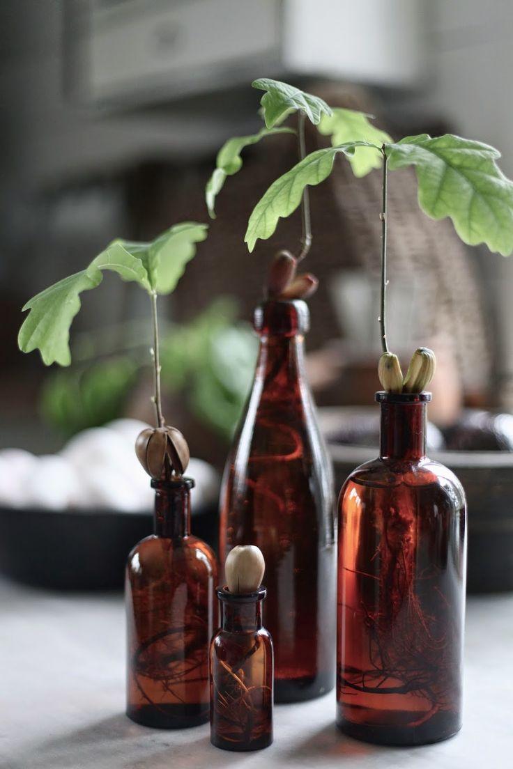 min lilla veranda: Ett livstecken och lite vår från Gotland