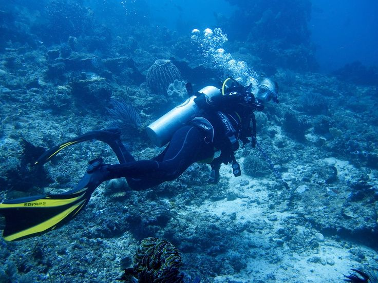 Scuba diving in Lembeh Island