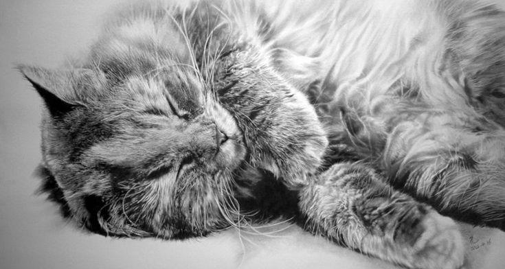 Los increíbles dibujos hiperrealistas de gatos hechos a lápiz por Paul Lung