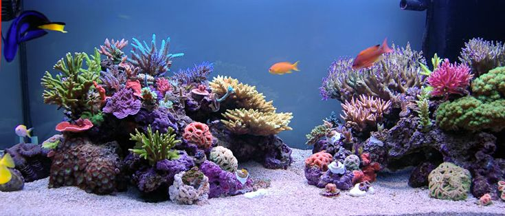 by Albert J. Thiel Aqua-Scaping your Nano-Reef is one of those tasks that you need to take care of and that seems to be subject to many different viewpoints, in