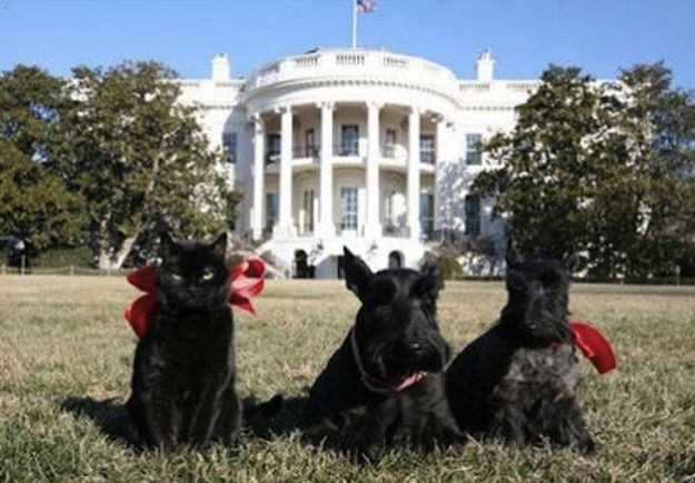 And arranged for the best White House lawn portrait ever. | 15 Reasons George W. Bush Should Come Work For BuzzFeed Animals