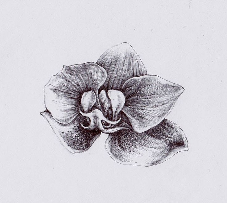 Орхидея. Рисунок. Материалы: офисная бумага, шариковая ручка.