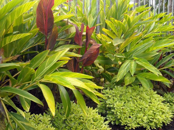194 best tropical gardens and plants images on pinterest gardens landscaping and tropical garden