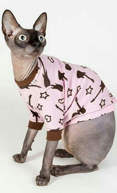 20 besten November 2015 new Sphynx Cat Clothing Styles Bilder auf ...
