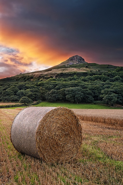 Roseberry Topping, Great Ayton, Hambleton District, North York Moors, England