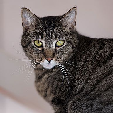Domestic Short Hair named Georgina is available for adoption at Best Friends Sanctuary in Kanab, Utah | Best Friends Animal Society