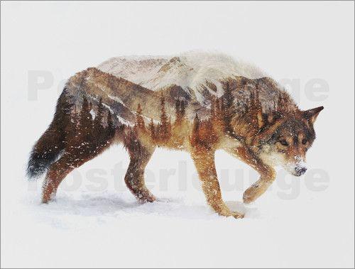 Andreas Lie - Arktischer Wolf