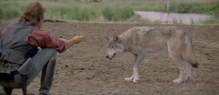 Picture No. 4  Dances with Wolves