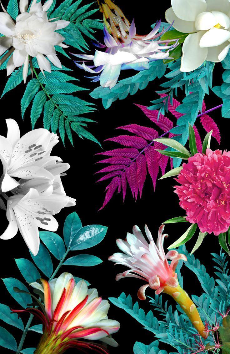 Wallpaper iphone tropical - Floral Botanic By Karen Hofstetter Flower Tropical Pattern