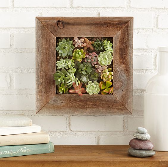 Succulent Living Wall Planter Kit | The Best Gift Finder | Arts and Crafts