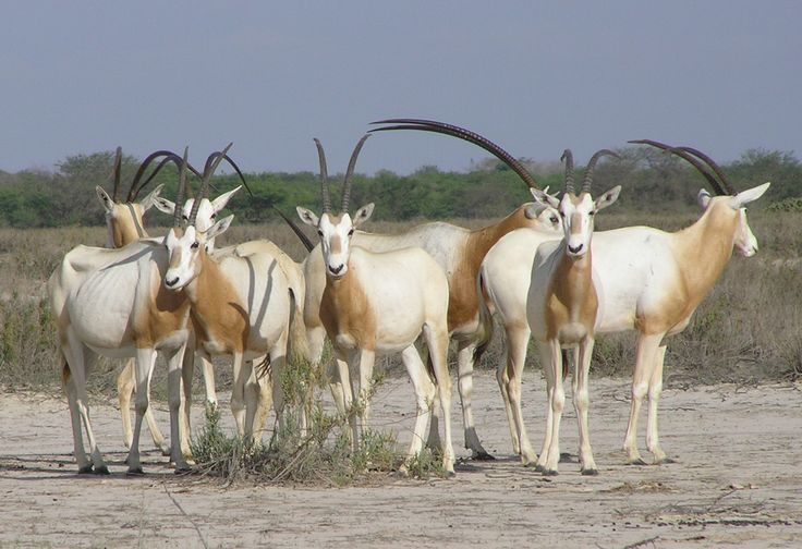 Senegalese wildlife is like having a safari in your backyard! It's home to 80 species of mammal, 330 species of bird, 36 species of reptile, 20 species of amphibian, and 60 species of fish!